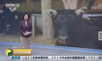 山东阳信:融合一二三产 打造肉牛全产业链