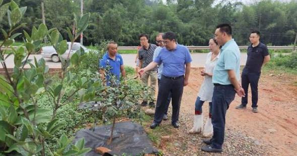 犍为县县委书记王策鸿调研油茶种植基地鼓励企业做强做大