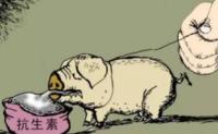 """我国提前两年实现兽用抗菌药""""零增长""""目标"""