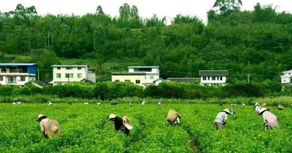 """四川省农村专业技术协会成为乡村振兴强大""""助力器"""""""