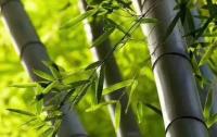 竹汁项目研发人张仲安与竹汁液的情缘