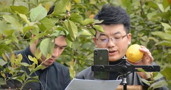 直播帮忙 四川省智慧农业科技协会帮助果农销果