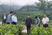 中国食品报调研雷波县农业产业传播优势助力发展