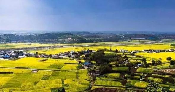 御康农业产业化联合体订单模式助力罗江打造油菜产业基地