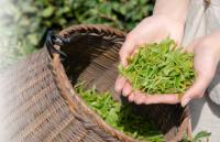 三家茶企接连申请IPO 茶业或将迎来头部企业发展期
