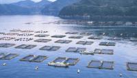 创新发挥引领作用  绿色渔业高速发展